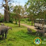 Taman Bali Safari and Marine Park
