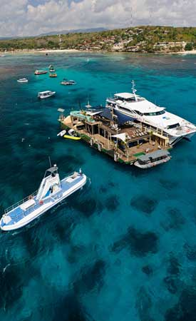 Pontoon Bali Hai Reef Cruise
