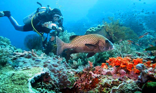 Spot Diving di Nusa Penida