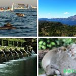Dolphin Tour ke Bali Utara