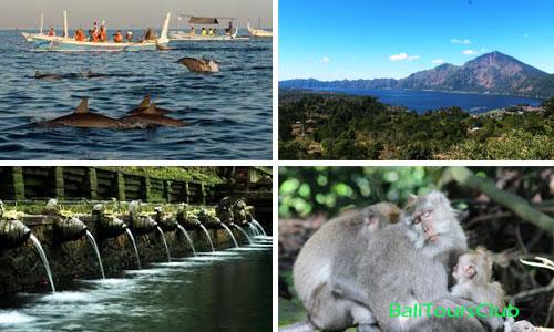 Dolphin Tour ke Lovina