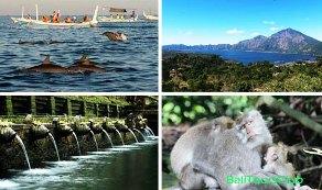 Paket Dolphin Tour