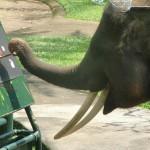 Elephant Safari Park Taro Ubud