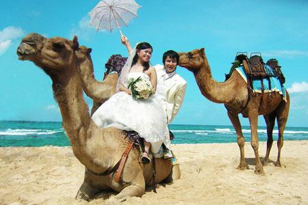 Foto prewedding dan wisata naik unta
