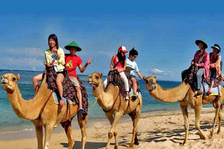 Naik Unta di Bali Camel Safari