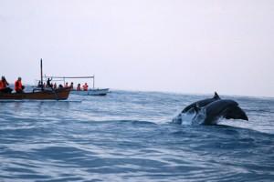 Nonton lumba-lumba di Lovina