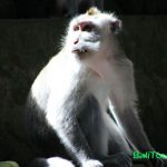 Ubud Tour - Monkey Forest