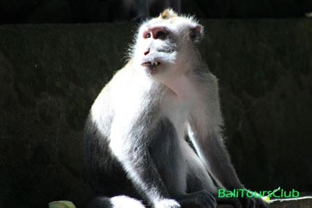 Ubud Tour - Monkey Forest