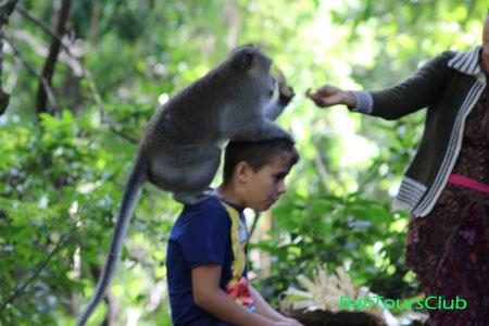 Berphoto dengan kera di monkey forest Ubud