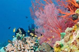 Diving di objek wisata Amed