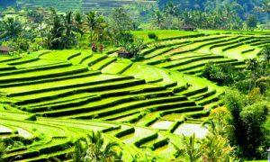 Objek wisata Jatiluwih Tabanan