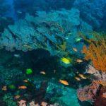 Paket Diving Tour di Amed
