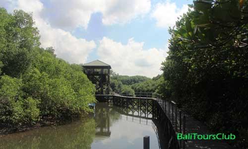 Hutan Mangrove di Denpasar Bali