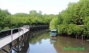 Pemandangan hutan Mangrove Bali