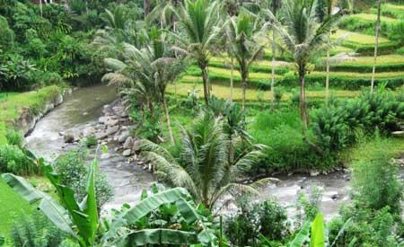 Sungai Ayung Dan Rafting Di Ubud Bali
