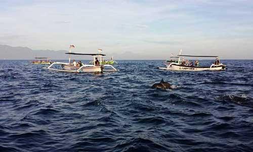 Lovina Tour Bali - nonton dolphin