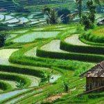 Objek wisata di Tabanan - Jatiluwih