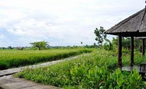 Suasana Desa Budaya Kertalangu