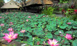 Taman bunga lotus di Pura Saraswati