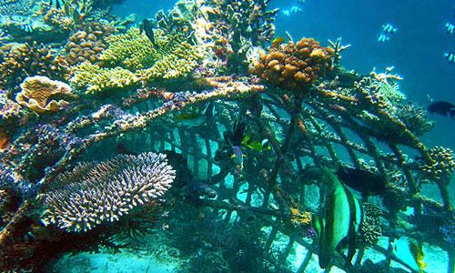 Diving di Pemuteran