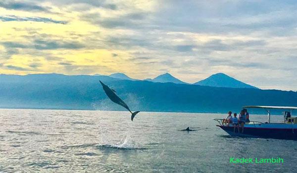 Atraksi lumba-lumba Lovina