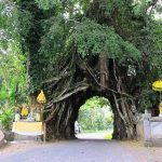 Tempat wisata Bunut Bolong Jembrana
