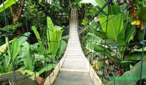 Jembatan Gantung di Rumah Pohon Temega