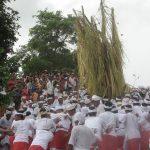 Tradisi Ngusaba Bukakak di Sangsit