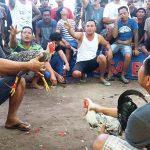 Tajen Sabung Ayam di Bali