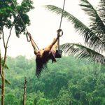 Bali Swing di Bongkasa