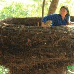 Rumah Pohon Bukit Lemped Peladung