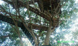 Tangga menuju menara Rumah Pohon
