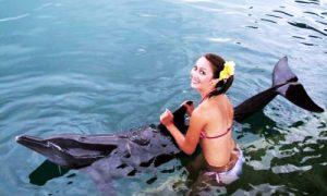 Berenang dengan Lumba-lumba di Dolphin Lodge
