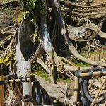 Munduk Asri Payangan di Gianyar