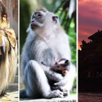 Paket Ubud - Tanah Lot Tour