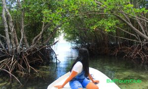 Mangrove tour di Jungutbatu Nusa Lembongan