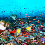 Spot Snorkeling di Nusa Penida