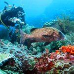 Spot Diving di Nusa Penida