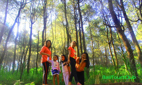 Hutan Pinus di Glagah Linggah Kintamani