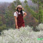 Padang Bunga Kasna di Temukus