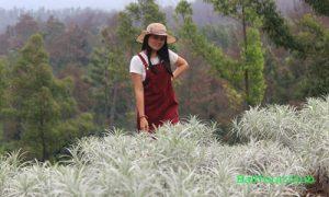 Padang Bunga Kasna Temukus Karangasem