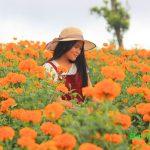 Ladang Bunga Marigold di Temukus