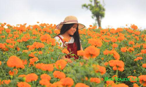 Foto selfie di ladang bunga Marigold Bali