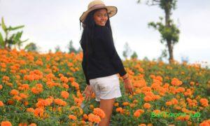 Kebun bunga Gemitir di Temukus Bali