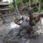 Tradisi Mepantigan di Bali