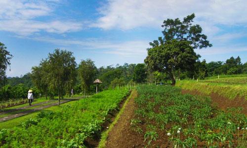 Wisata agro di desa Pelaga Petang