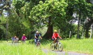 Wisata naik sepeda di Ubud Bali