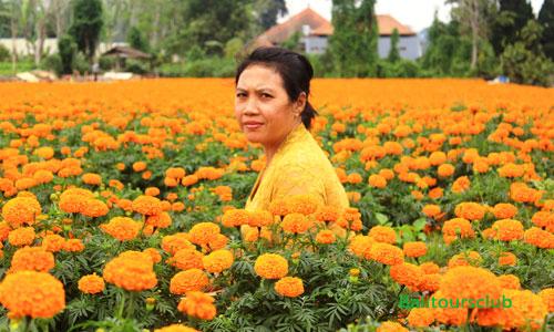 Ladang Bunga Marigold di Belok Sidan