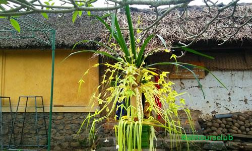 Sanggah Gedebong di desa Tenganan