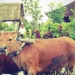 Wisata Pedesaan di Bali